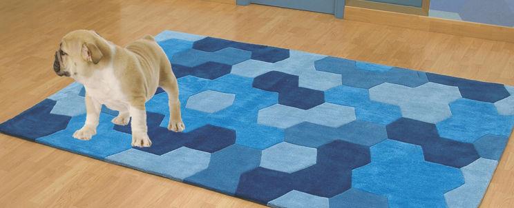 eliminar el olor de orina de perro de las alfombras